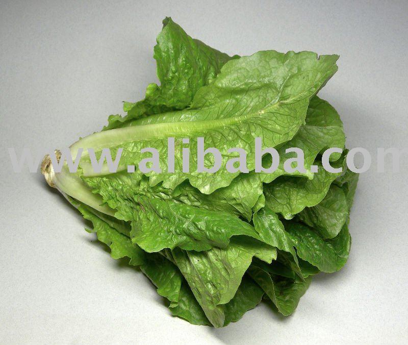 Lettuce products,Georgia Lettuce supplier