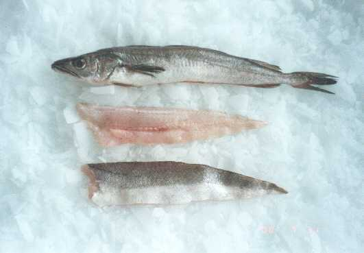 Whiting Fillets productsUnited States Whiting Fillets