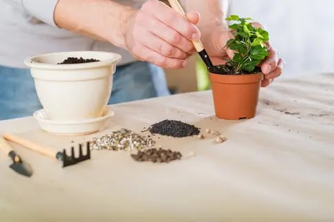 spring plant repotting indoor garden care man