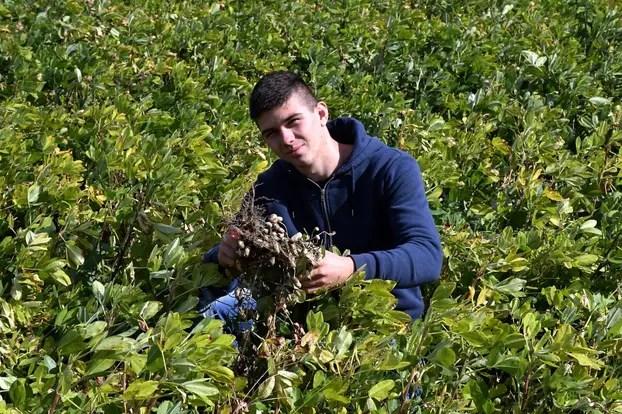 Kutovi - Mladi poljoprivrednik Filip Prša bavi se uzgojem kikirikija i visokoprinosne soje.