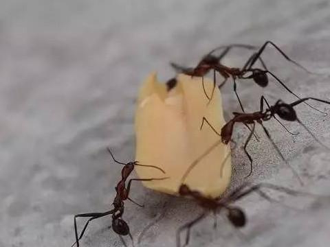 夢見螞蟻搬食物 - 天天運勢