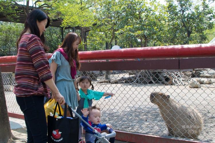 【台南親子旅遊推薦:頑皮世界】頑皮世界優惠票! 南部最大動物園頑皮世界! 適合帶小朋友來!!好好玩值回票價~頑皮世界