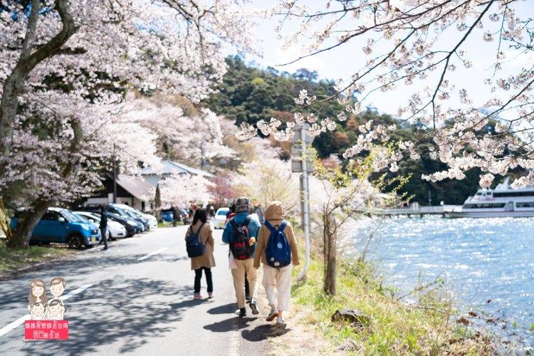 【日本旅遊】來日本看櫻花囉~一整排美麗的櫻花,就像在畫中…琵琶湖畔賞櫻名所-海津大崎!