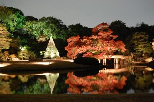 紅葉前線が東京にもやってきていくつかの公園・庭園を見に行く。<br /><br />ラジオで六義園の紅葉のライトアップが綺麗と聞いていたので、天気が悪くても綺麗だろうと思い行くことにする。 <br />その前に2箇所の公園も回った。 <br /><br />(1)日比谷公園 <br />カミさんが、22日に行った時に松本桜の紅葉が見事だと言うので、先ず訪れた。 <br />松本楼の隣に大きな大きなイチョウの木が有り、紅葉はやや盛りを過ぎていた。他の木々もかなり紅葉が進んでおり、今週末までは楽しめそう。 <br />(2)小石川後楽園 <br />夏に行った時に、紅葉も綺麗そうと思った。調べてたら、紅葉もかなり行けそうと分かったので、日比谷から移動。果たして、期待以上の紅葉だった。天気が良ければもっと素晴らしい絵に成ったはず。紅葉は今を盛りに赤く、黄色に成っていた。ここは、ライトアップがやっていないので残念。 <br />(3)六義園 <br />いよいよメイン。後楽園とそっくりの造りの公園。後楽園は1629年以降水戸光圀が完成させた。六義園は、1702年、川越藩主柳沢吉保が作った。何れも、「回遊式築山泉水」で、大きな池を中心の大名庭園である。大きさもほぼ同じ。 <br />さて、ライトアップ。美しい。綺麗。幻想的・・・ <br />素晴らしいです。ただ、もみじなどまだ真っ赤には成っていなかった。これから、さらに綺麗になると思われる。今週末くらいが見ごろか。 <br />時間のある人には是非お勧めです。休日は大変な人かも。 <br /><br />