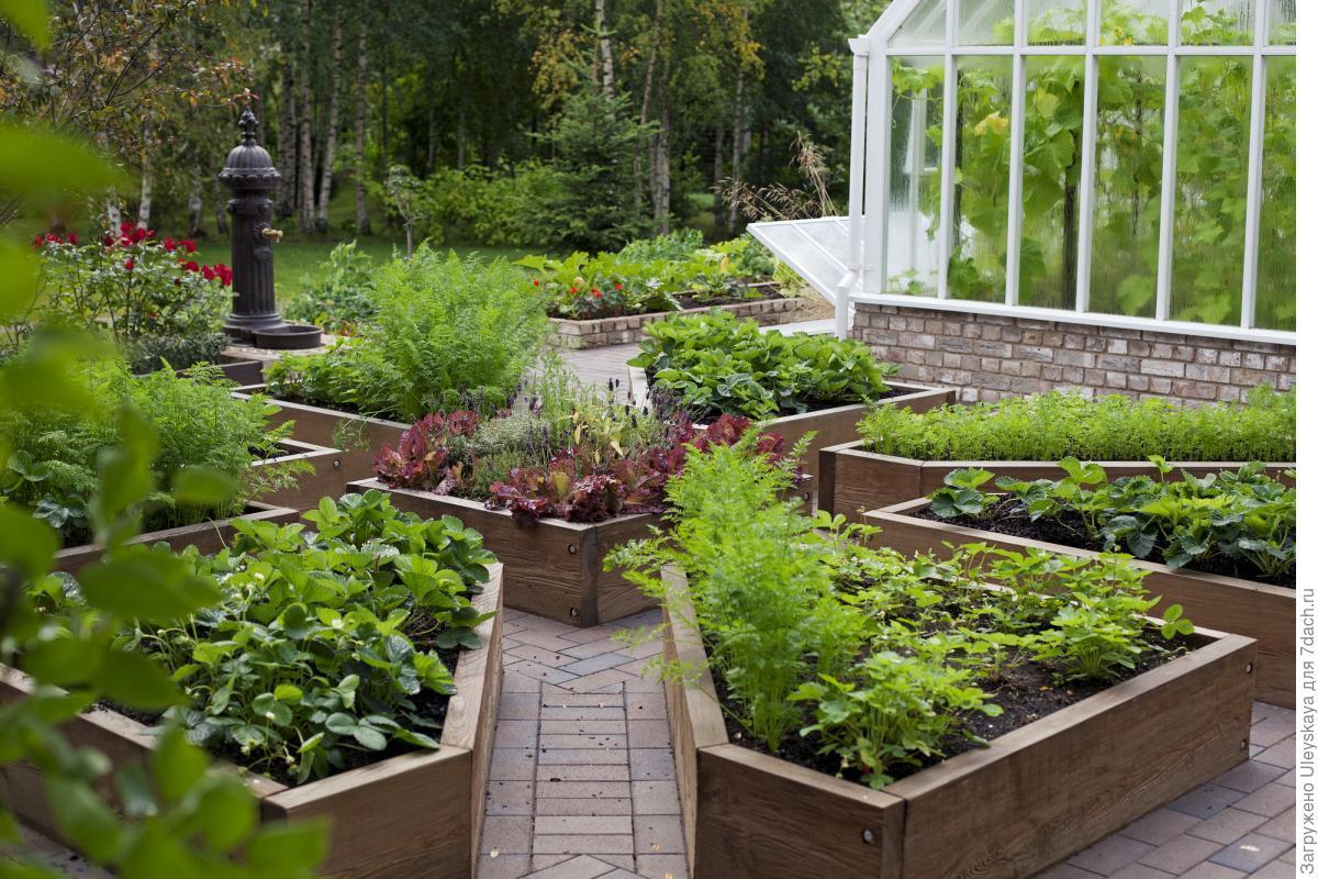 дизайн огорода фото с посадками овощей процессе игры дети