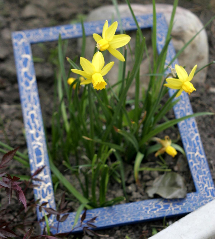 Piantare I Bulbi Di Tulipani cesto per lampadine fai-da-te. qual è il vantaggio di