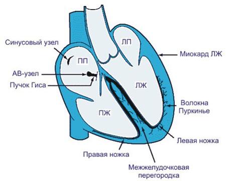 Tien prosztatitis