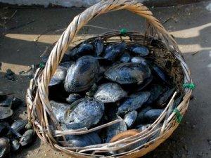 河蚌的營養價值_肉類_飲食_99健康網