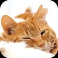 Warm Sleepy Kitty 4K Wallpaper 1.1
