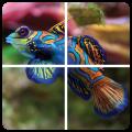 Puzzle Fish for children 1.3