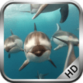 Dolphins Video Live Wallpaper 3.5