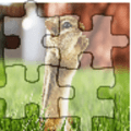 Animal Photo Puzzle. 1.0