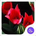 Gorgeous-APUS Launcher theme 513.0