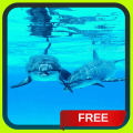 Dolphins Live Wallpaper LWP 1