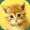 Baby Animals Game 1.7