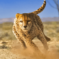 Savanna Simulator: Wild Animal Games 0.1