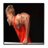 Bodyweight Exercises 1.0