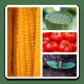 Vegetables Quiz 1.0.6