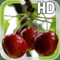 Berry Cherry LWP Free 1.1