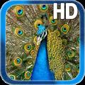 Birds Peacock LWP Free 1.1