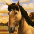 My Horse 1.15.5