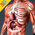 Human Anatomy And Physiology 1.0.1