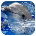 Dolphins. Live Video Wallpaper 1.03