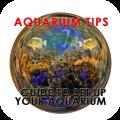 Aquarium Tips - Guide To Set Up Your Aquarium 1.02