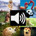 Animal Sounds HD (Free) 1.0