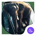Elephant APUS Launcher theme 1