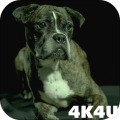 4K Dogs Slow-mo Video Live Wallpaper 1.1