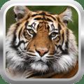African Tiger Shooter 3D 2.0.2