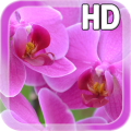 Pink Orchid LWP Free 1.0