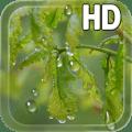 Drops Leaves LWP Free 1.0
