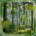 Forest Live Wallpaper 1.2