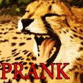 Prank Angry Cheetah 1.0