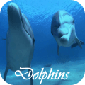 Dolphins Video Live Wallpaper 1.0