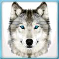 Ultimate Wild Wolf Simulator 1.1