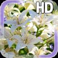 Lily Flower LWP 1.0