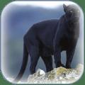 Panther Wallpaper 1.0