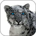 Snow Leopard Video Wallpapers 1.1