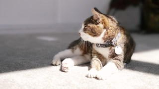 女人像貓最迷人,妳是喵星人女友還是汪星人女友?