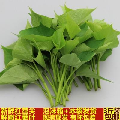 紅薯尖葉種價格/報價_紅薯尖葉種暢銷商品比價 - 挖東西
