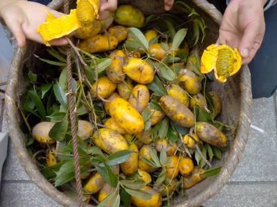 九月黃水果價格/報價_九月黃水果暢銷商品比價 - 挖東西