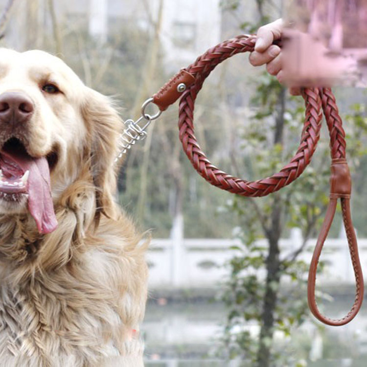 buy dog leash dog