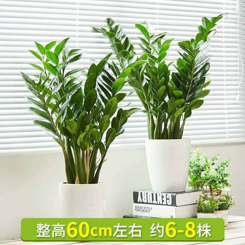 money tree potted flowers
