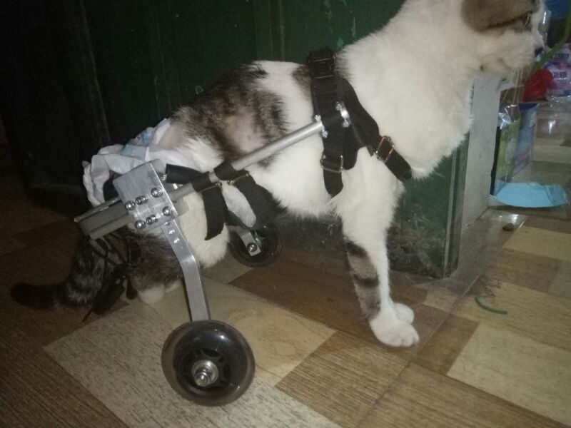 wheelchair for cats leather bean bag chairs adults usd 68 14 cat paralyzed scooter disability assisted hind limb exercise car broken leg dog