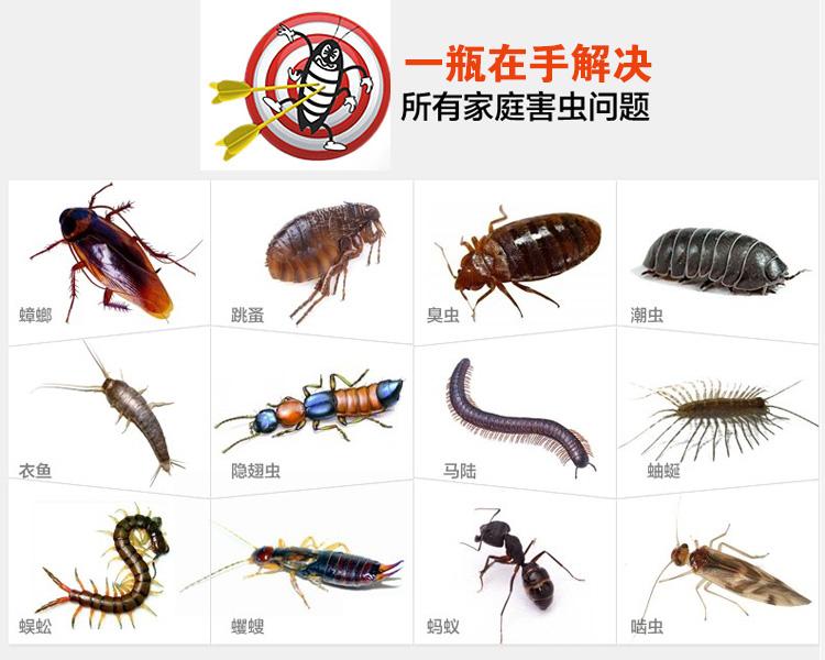 殺蟲劑滅蟑螂噴煙霧劑彈除跳蚤蜈蚣臭蟲白螞蟻蚊蠅潮蟲家用環保藥
