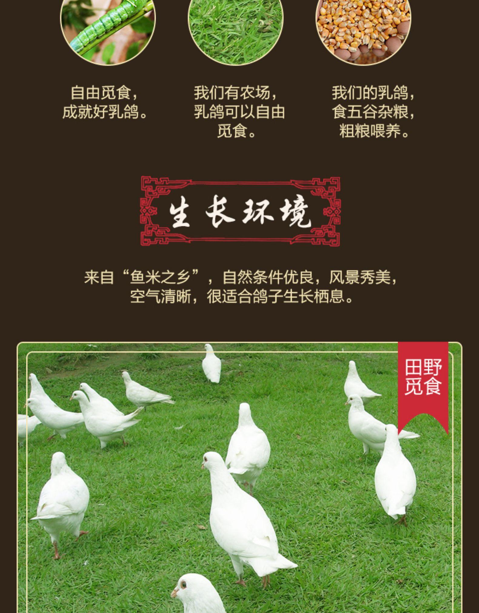 屋下鵝 乳鴿300g*3只 鴿子肉散養鴿子活體新鮮現殺乳鴿子肉