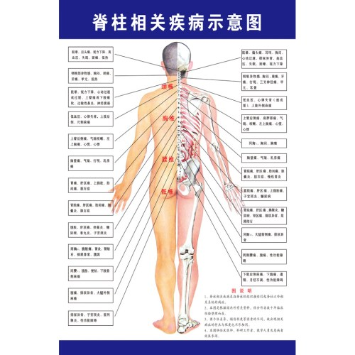 small resolution of color classification spine related diseases illustration blue spine related diseases illustration green spine related diseases illustration border